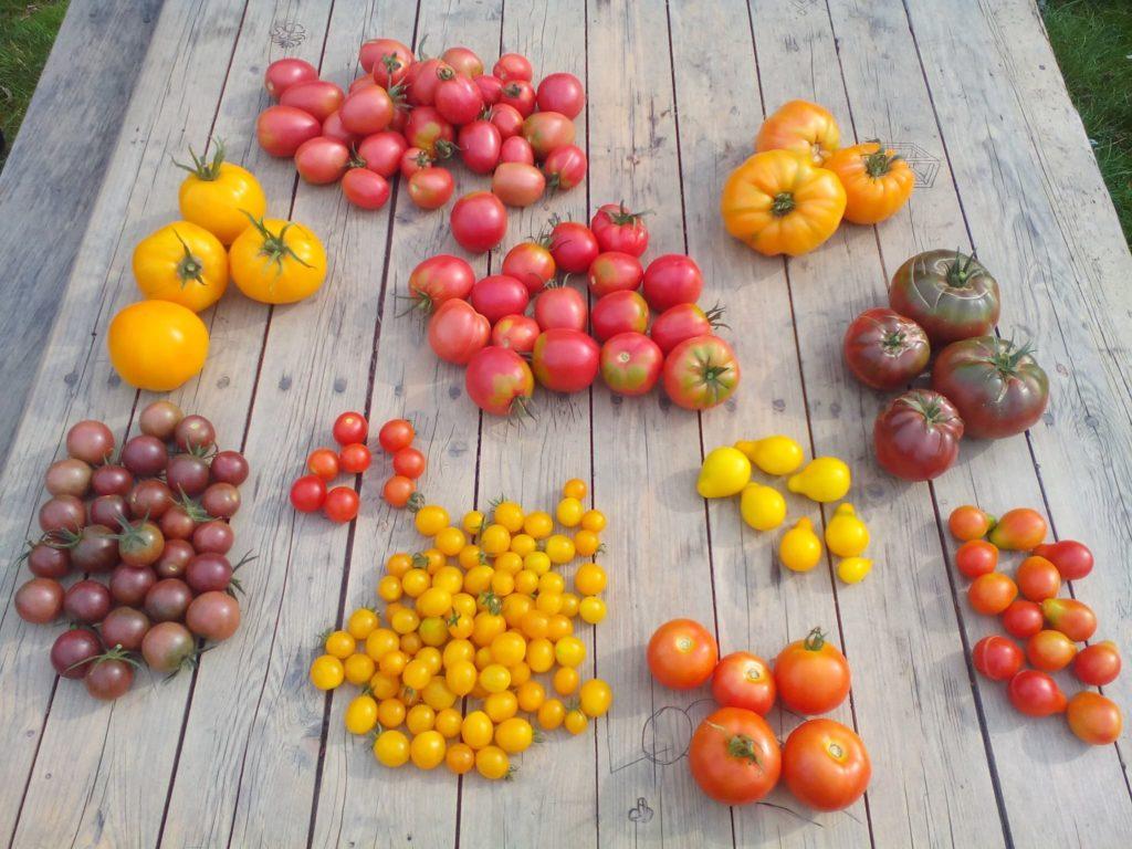Vive les tomates