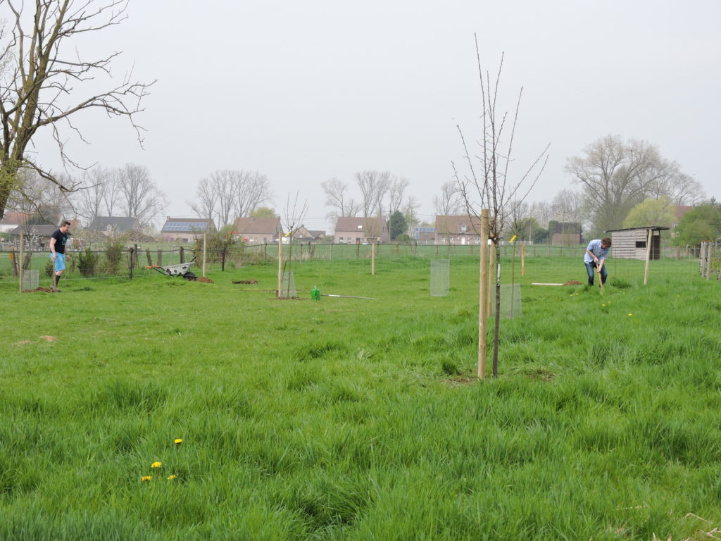 Chantier participatif: Plantation de 15 fruitiers