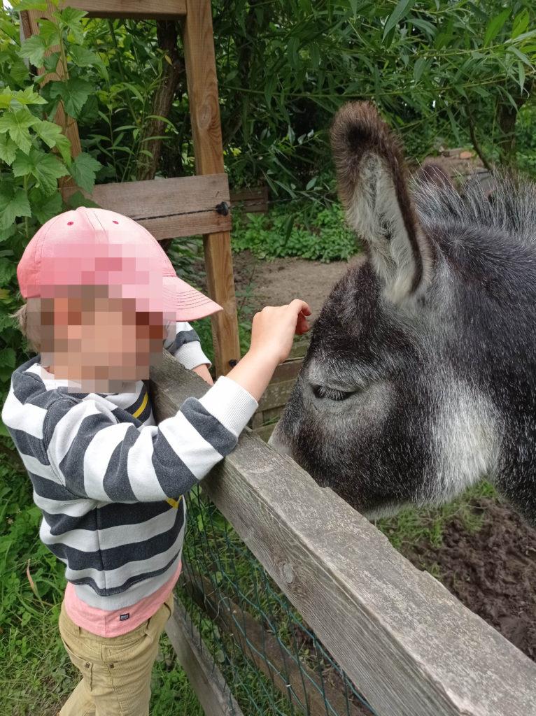 Mojito l'âne a reçu beaucoup de caresses