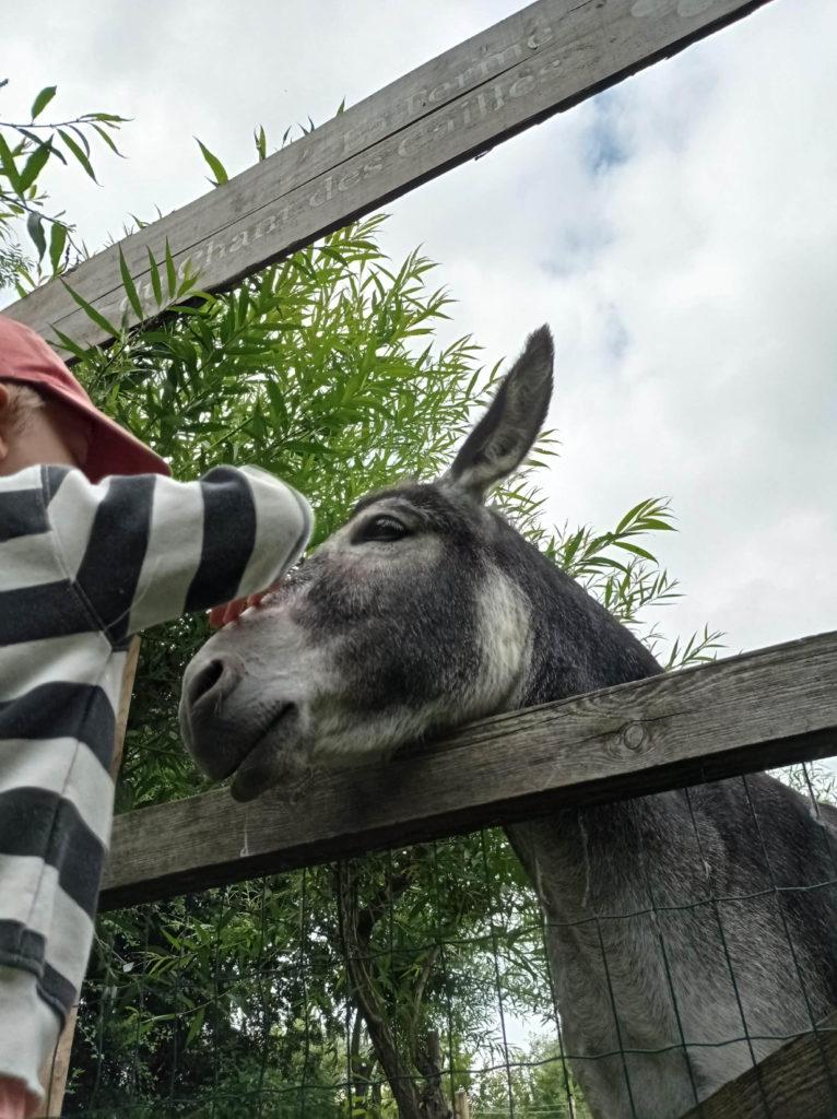 Mojito l'âne